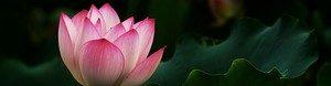 Lotus2-001