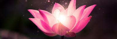 1-lotus15