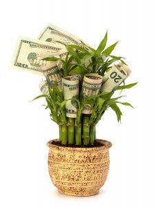 bamboo-money